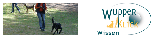 Ein Hund zerrt an der Leine