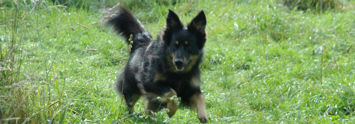 Hilf mein Hund jagd - Jagdersatztraining