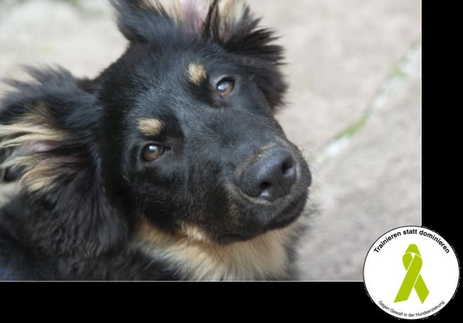Hundeschule Wupperklick - Haben Sie schon den Durchklick?